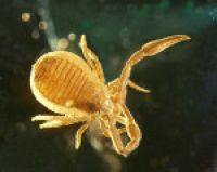 Arthropods in Baltic Amber